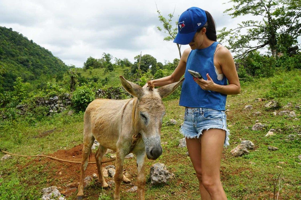 donkey countrside jamaica